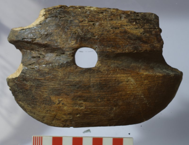 Side of wooden half-shell from a block (HXD 284(2)). Note the grooves for a rope strop. Scale in centimetres.