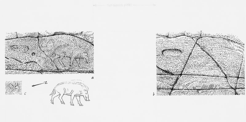 Publication drawing of rock carvings, including the foot-prints, 'King Fergus', the boar, the ogham, and an unidentified quadruped. Photographic copy.