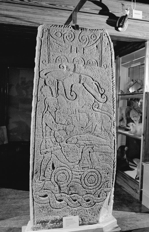 View of reverse of Golspie Pictish cross slab in Dunrobin Museum