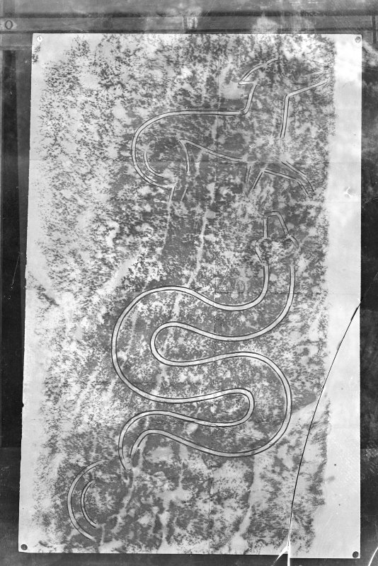 Photographic copy of rubbing showing detail from the reverse of Thornton Pictish cross slab.