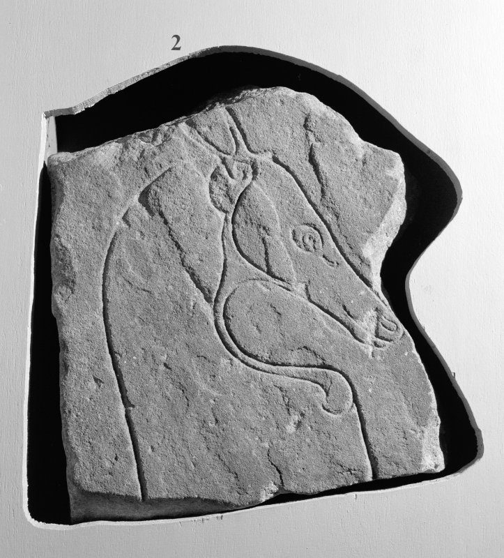View of Ardross horse Pictish symbol stone fragment on display in Inverness Museum.