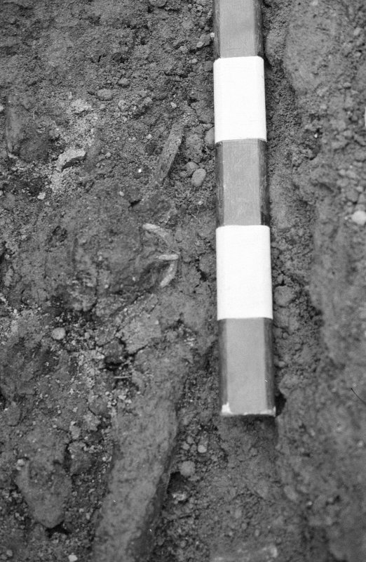 Jedburgh Abbey excavation archive Frame 21: Area 1: Room 3: Detail of Grave 282, showing buckle.