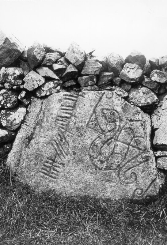 View of symbol stone built into stone dyke. Original half-plate glass negative captioned: 'Sculptured Stone at Brandbutt Inverurie 1902'. No month given but presumably December.