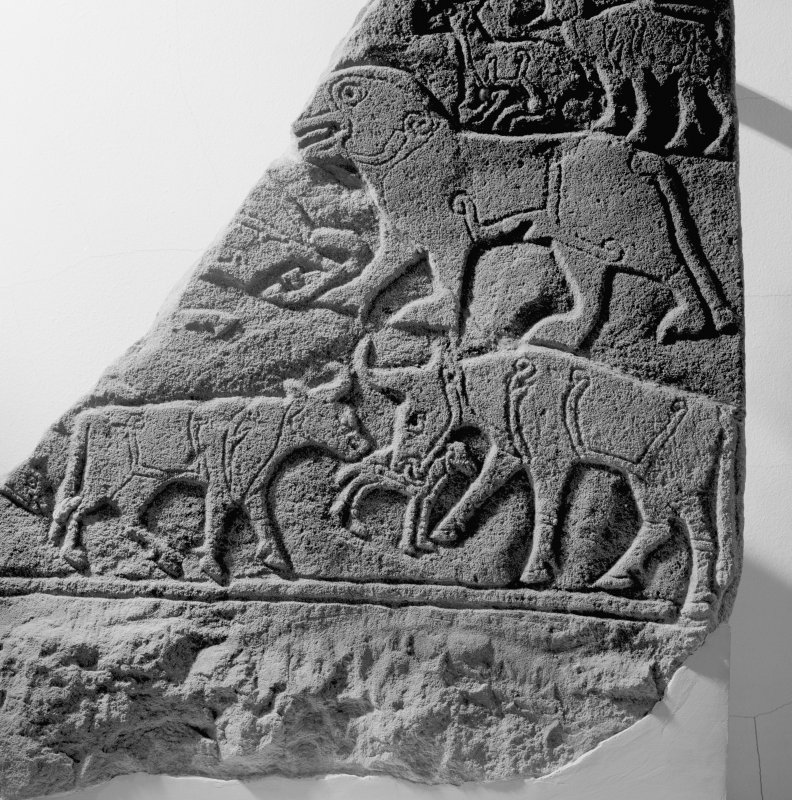 View of a detail of the Pictish carved stone known as the Calf Stone from Portmahomack.