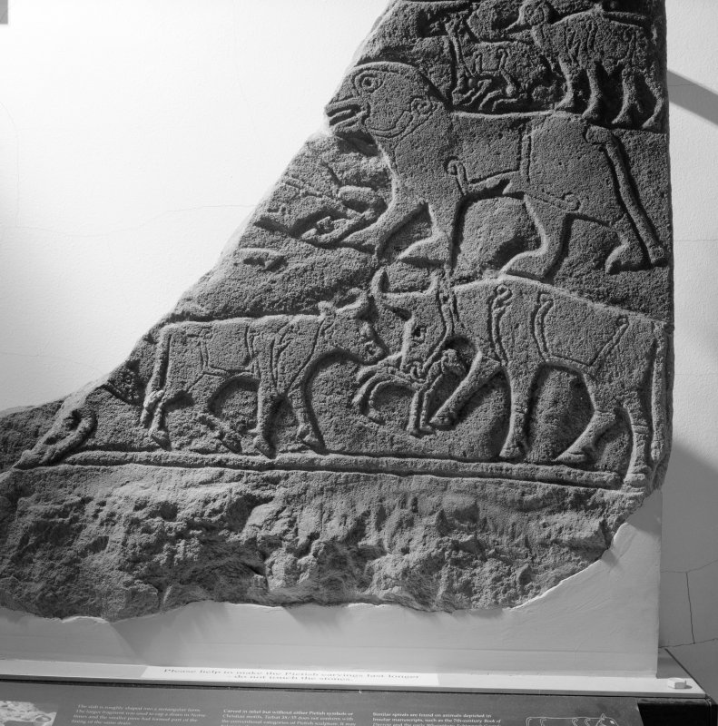 View of the Pictish carved stone known as the Calf Stone from Portmahomack.