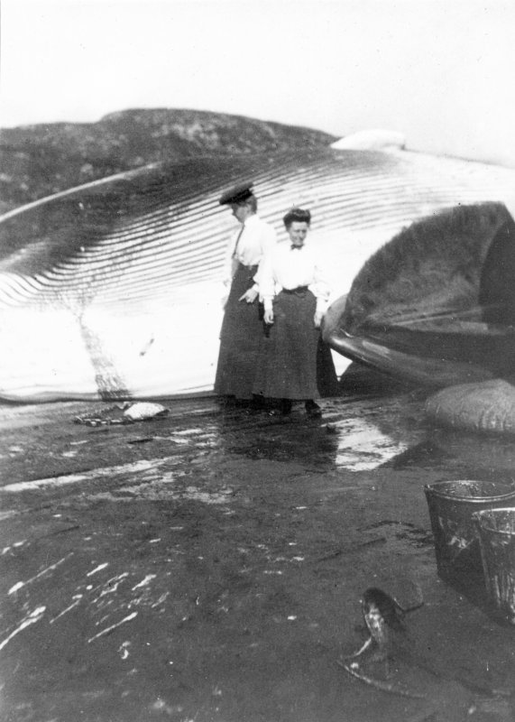 Two Edwardian ladies standing in front of a whale at the whaling station