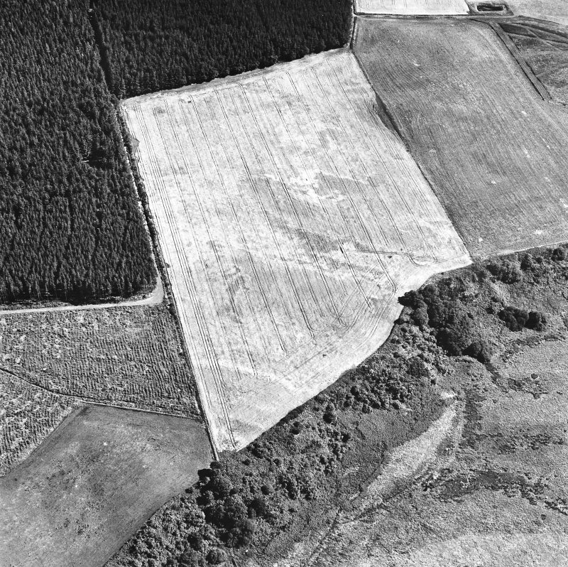 Easterton Wood, oblique aerial view, taken from the NW, centred on the cropmarks of a possible fort.