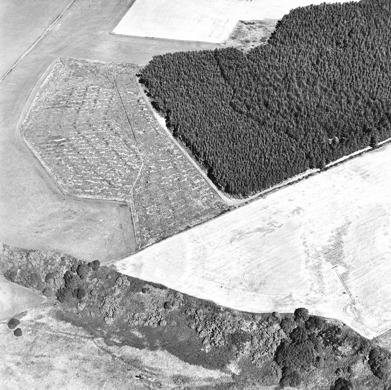 Easterton Wood, oblique aerial view, taken from the WSW, centred on the cropmarks of a possible fort.