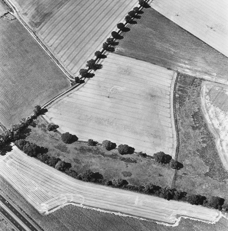Glencarse, oblique aerial view, taken from the E, centred on the cropmarks of at least four souterrains.