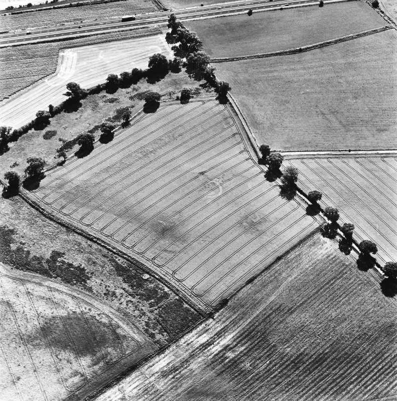 Glencarse, oblique aerial view, taken from the NNW, centred on the cropmarks of at least four souterrains.