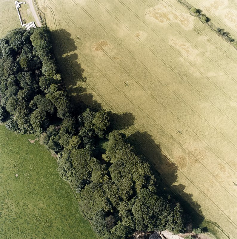 Oblique aerial view centred on the cropmarks of the fort and rig, taken from the SSE.