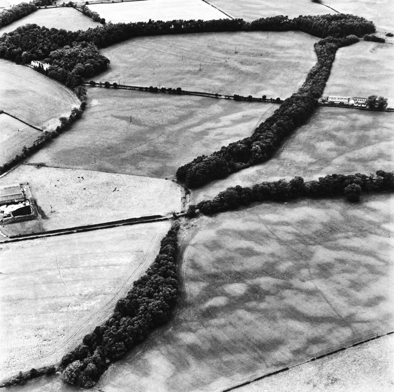 Holywood, oblique aerial view, taken from the ENE, centred on rig and linear cropmarks. The cropmark of a cursus monument are visible in the centre top half of the photograph.