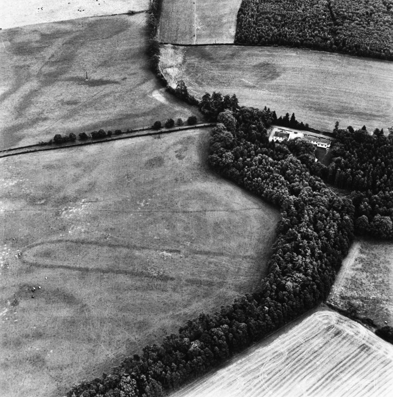 Holywood, oblique aerial view, taken from the WNW, centred on the northern cursus monument and linear cropmarks.