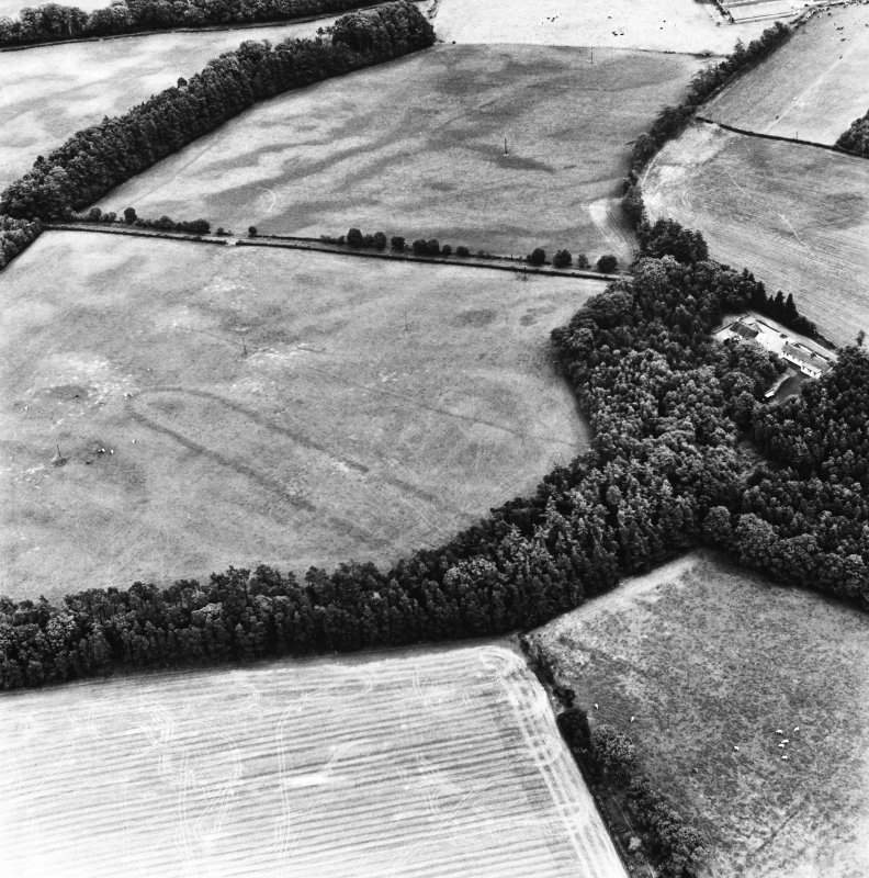 Holywood, oblique aerial view, taken from the NW, centred on the northern cursus monument and linear cropmarks.
