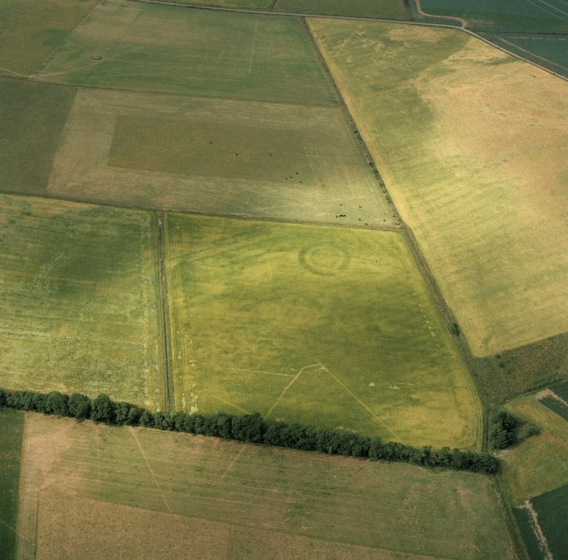 Oblique aerial photograph, centred on the cropmarks of an enclosure.