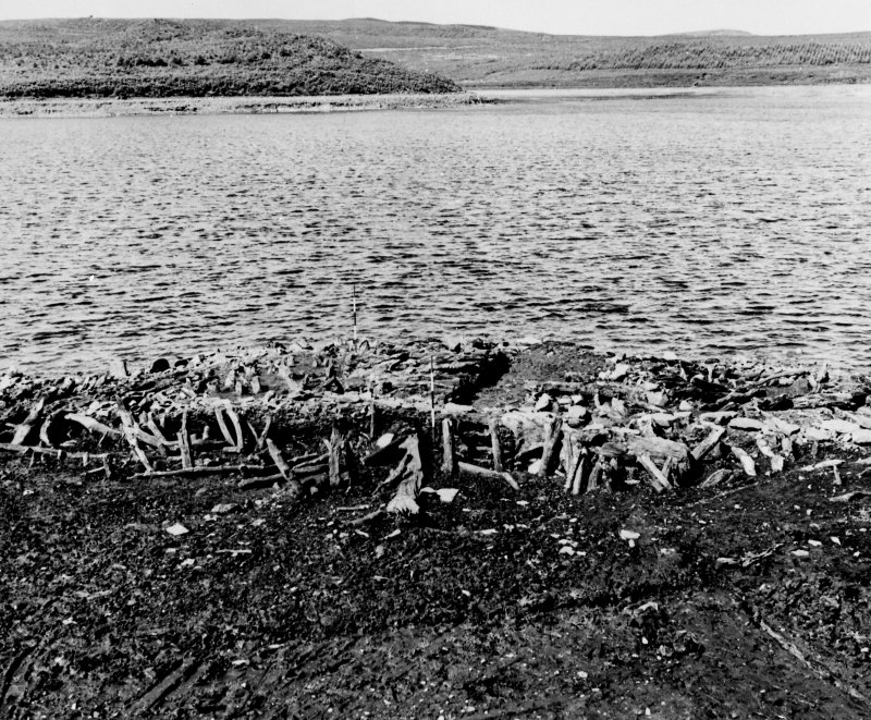 Excavation photograph : crannog during excavation, ranging rods marking side of the house. (large mounted copy print stored with MS/456)