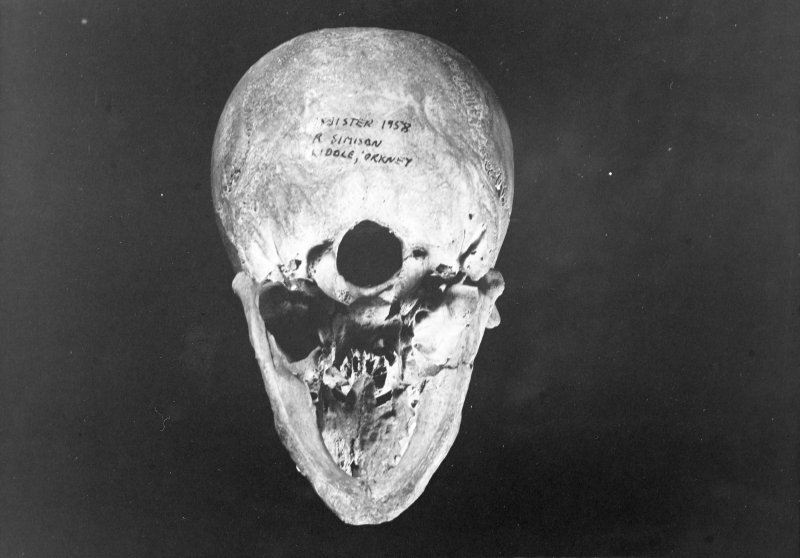I11 44 'Charlie' basal view with mandible reconstructed.  No scale.