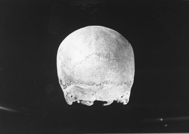 I11 50  Skull 2, rear view.  No scale.